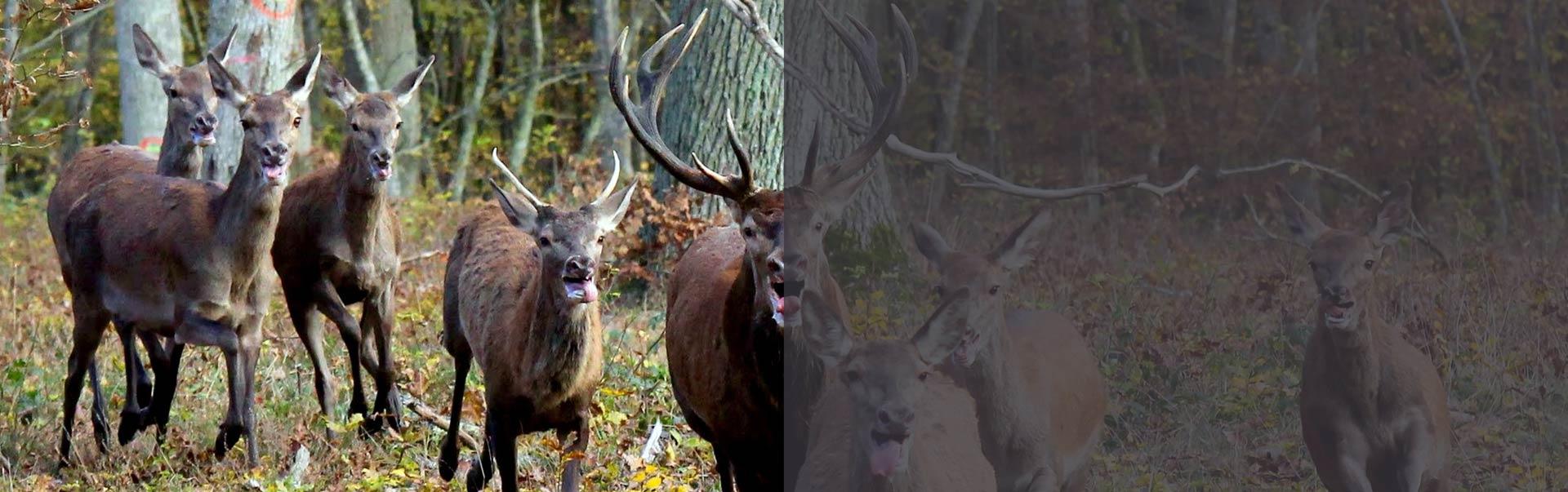 gestion parcelles de chasse